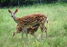 Какие животные обитают в лесах России?