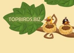 Topbirds.biz — какие отзывы, платит или лохотрон?