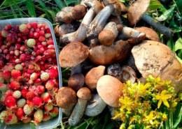 Какая карта грибных и ягодных мест Омской области 2021?