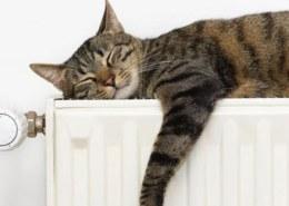 Когда включат отопление в Красноярске осенью 2021 года?